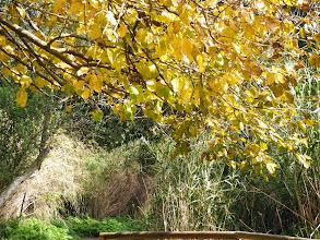 Photo: Солнечные листья