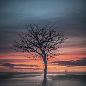 Alone and Free by Corey Gross - Landscapes Sunsets & Sunrises ( reflection, tree, silhouette, sunset, south dakota )
