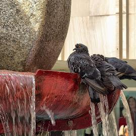 by Slavko Marčac - City,  Street & Park  Fountains