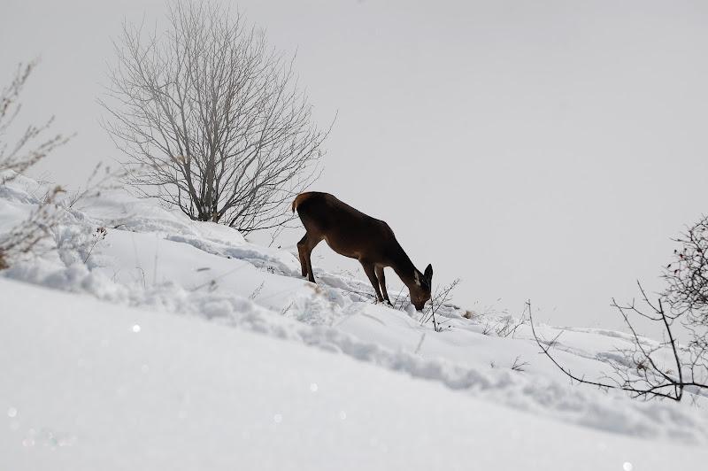 Il grigio inverno. di gigidueelle