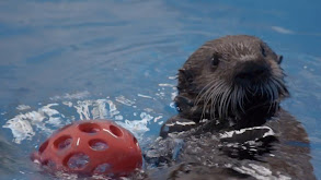 Sea Otter Summer Camp thumbnail