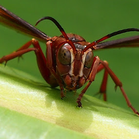 Buadagggg Juuummm... by Dedi Sukardi - Animals Insects & Spiders