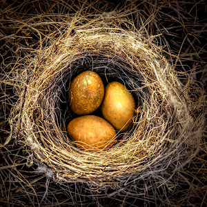 gold-eggs-P2190941-HR.jpg