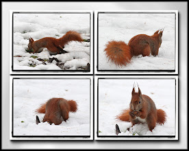 Photo: 16. december 2012 - Fundet! :-)
