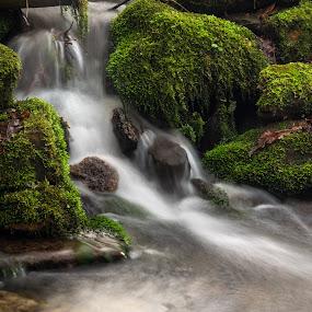 by Jarda Chudoba - Nature Up Close Water