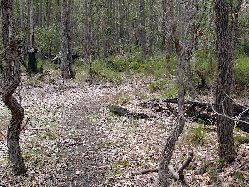 Photo: Waterous Trail - October 2012 - A taste of the singletrack
