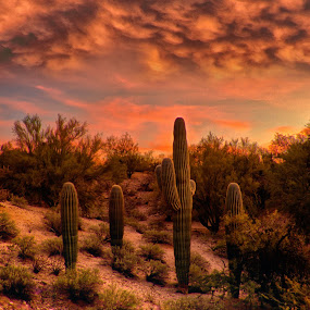 Mammar Clouds by Charlie Alolkoy - Landscapes Deserts ( clouds, sky, desert, arizona, tucson, cactus )