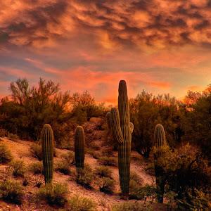 cactushideawayp.jpg