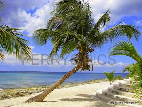 Photo: Beautiful palm trees