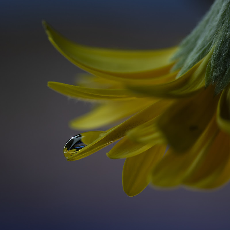 Yellow di RobertaSilvestro