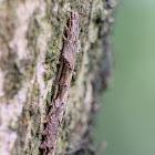 Caterpillar 毛蟲