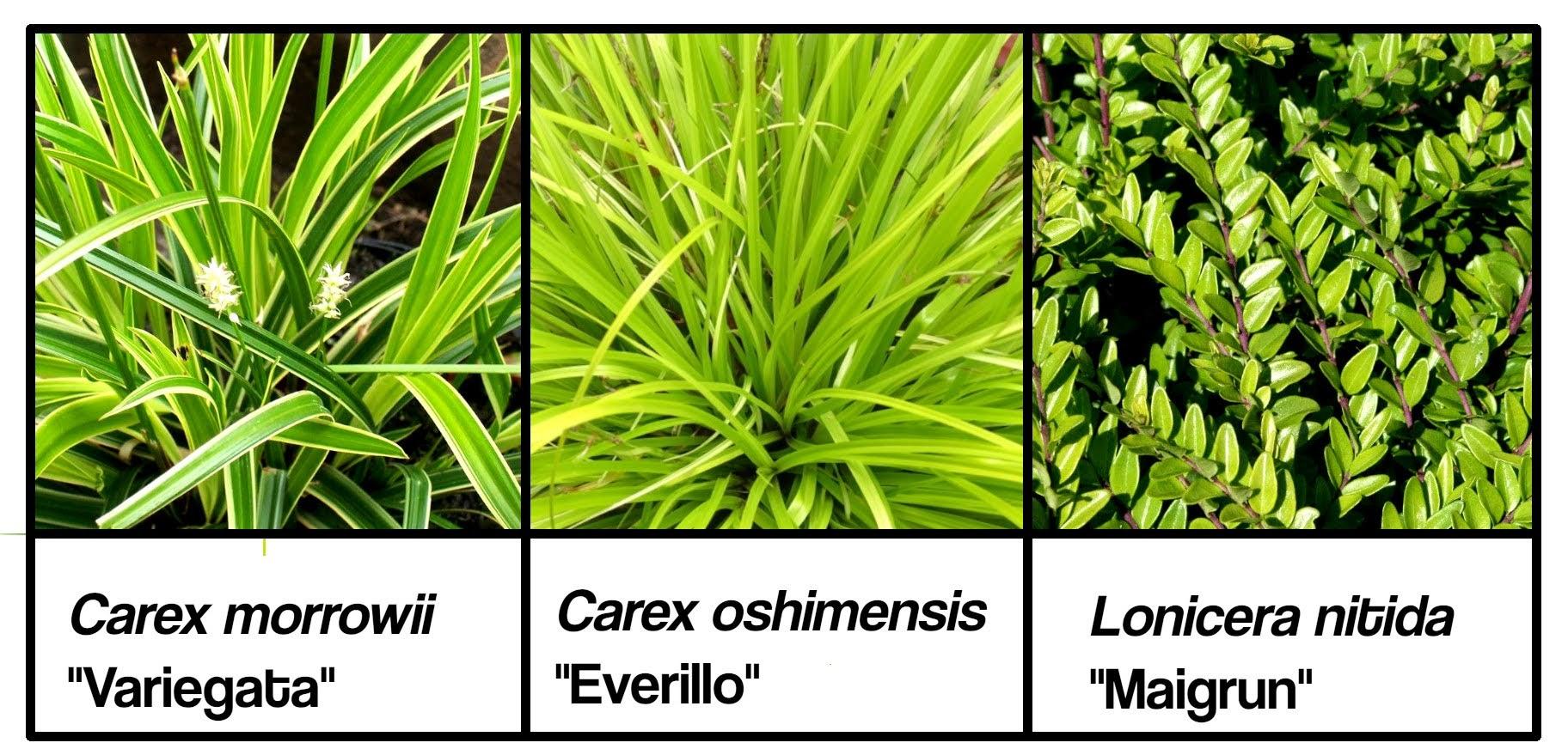 Ejemplo de especies que podemos plantar en pleno sol