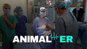 Animal ER thumbnail