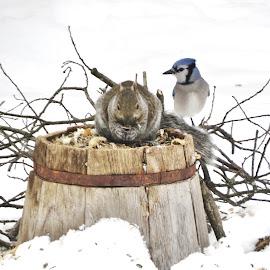 Winter feeding. by Carolyn Kernan - Uncategorized All Uncategorized (  )