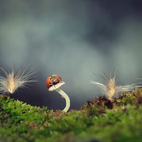 by Syamsu Hidayat - Animals Insects & Spiders ( macro, insect, light, close up, animal, mushrooms )