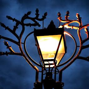 Light the night by Amy-louise Maszuchin - Artistic Objects Still Life ( art, street, lamp, night, light )