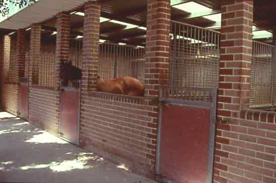 Stables with open plan to improve ventilation and decrease exposure to airway irritants.