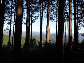 木々の隙間から展望