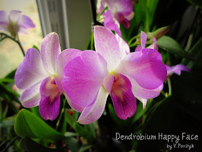 Photo: Den. Happy Face