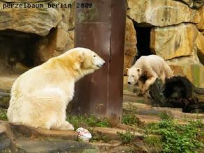 Photo: Knut pirscht sich vorsichtig heran ;-)
