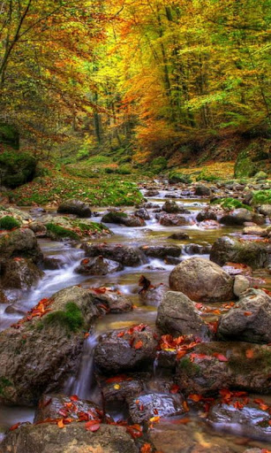 Colourful forest brook
