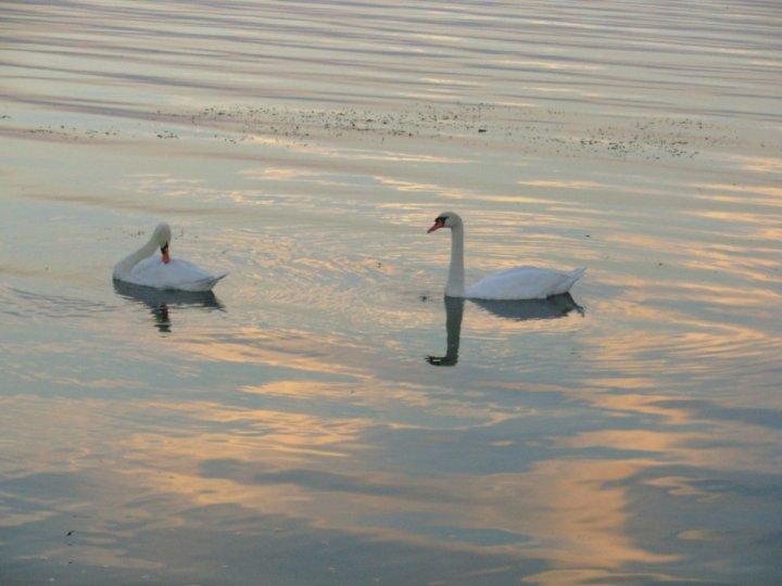 il lago dei cigni di rosetta
