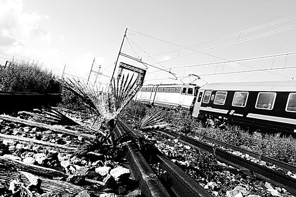 Mira il treno che passa di squalotoro