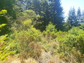 Photo: The redwoods