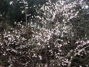 桜が咲いて