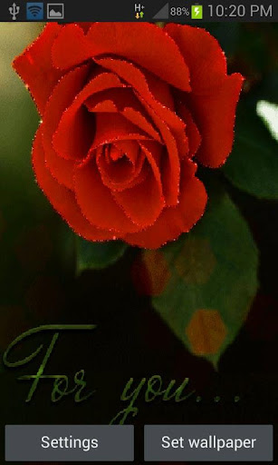Rose For You LWP
