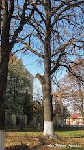 "Photo: Colegiul National ""Mihai Viteazul"", Str. Dr. Ioan Ratiu, Nr.111 - parculet,  ""Stejarul Unirii"" - (2013.10.29)"