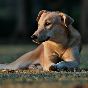 Street Dog by Jazz Photography - Animals - Dogs Portraits