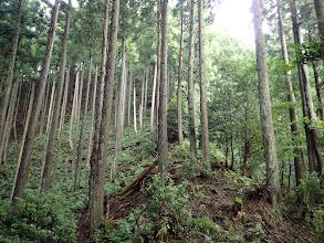 尾根沿いに灌木が多く
