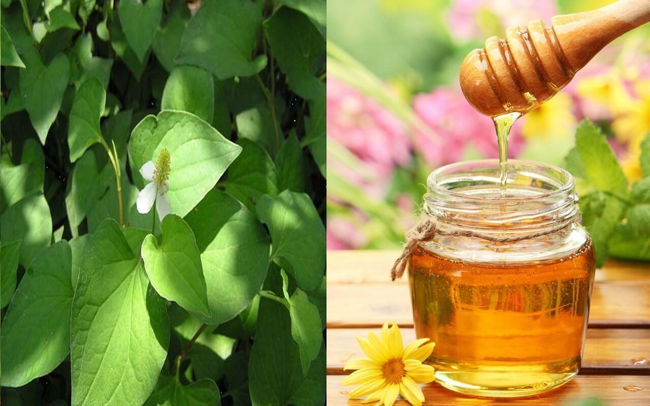 Công dụng của rau diếp cá và mật ong