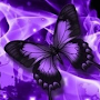 purple butterflies wallpaper APK icon