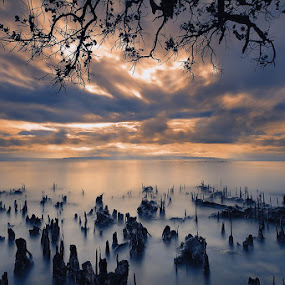 by Anthony Serafin - Landscapes Waterscapes