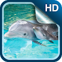 Dolphin Live Wallpaper HD icon