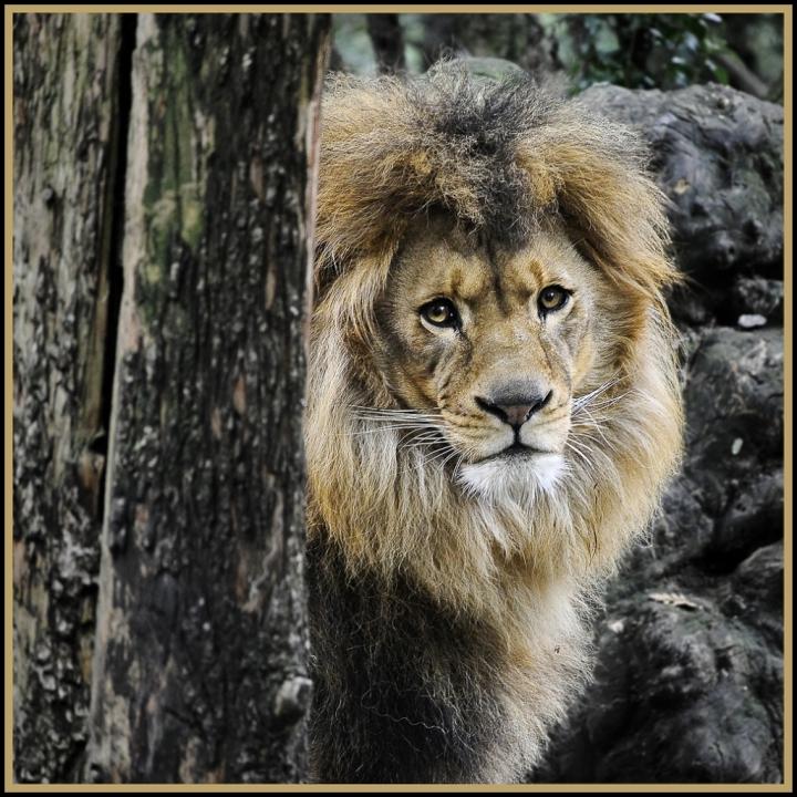 Il re della foresta di Luca G.