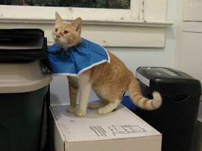 """Photo: Derek and Elisa went in to get """"the big snip"""" done.  They were *not* happy with the collars to keep them from licking themselves."""