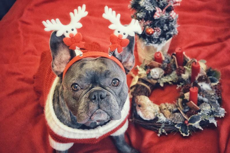 la pelosa aiutante di Babbo Natale  di Fra_frame93