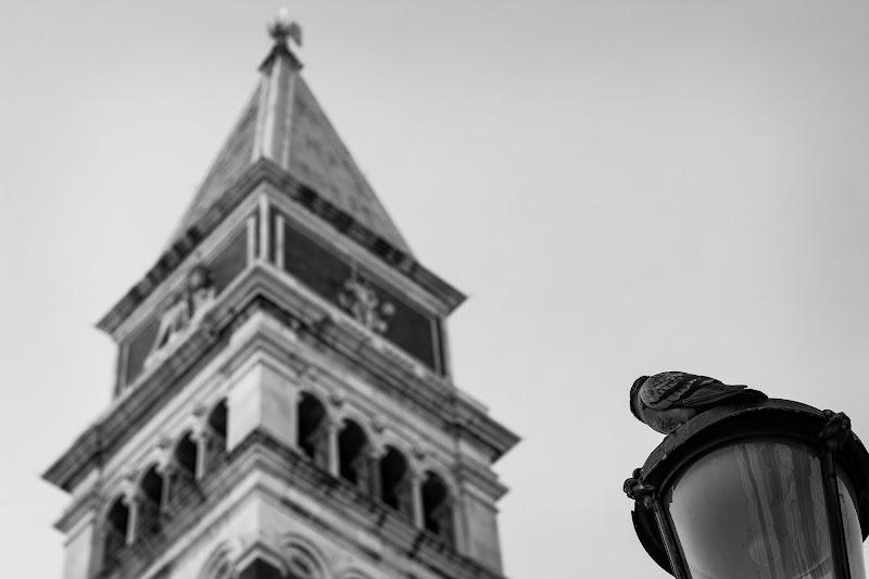 San Marco ed il piccione  di Tudor Craciun