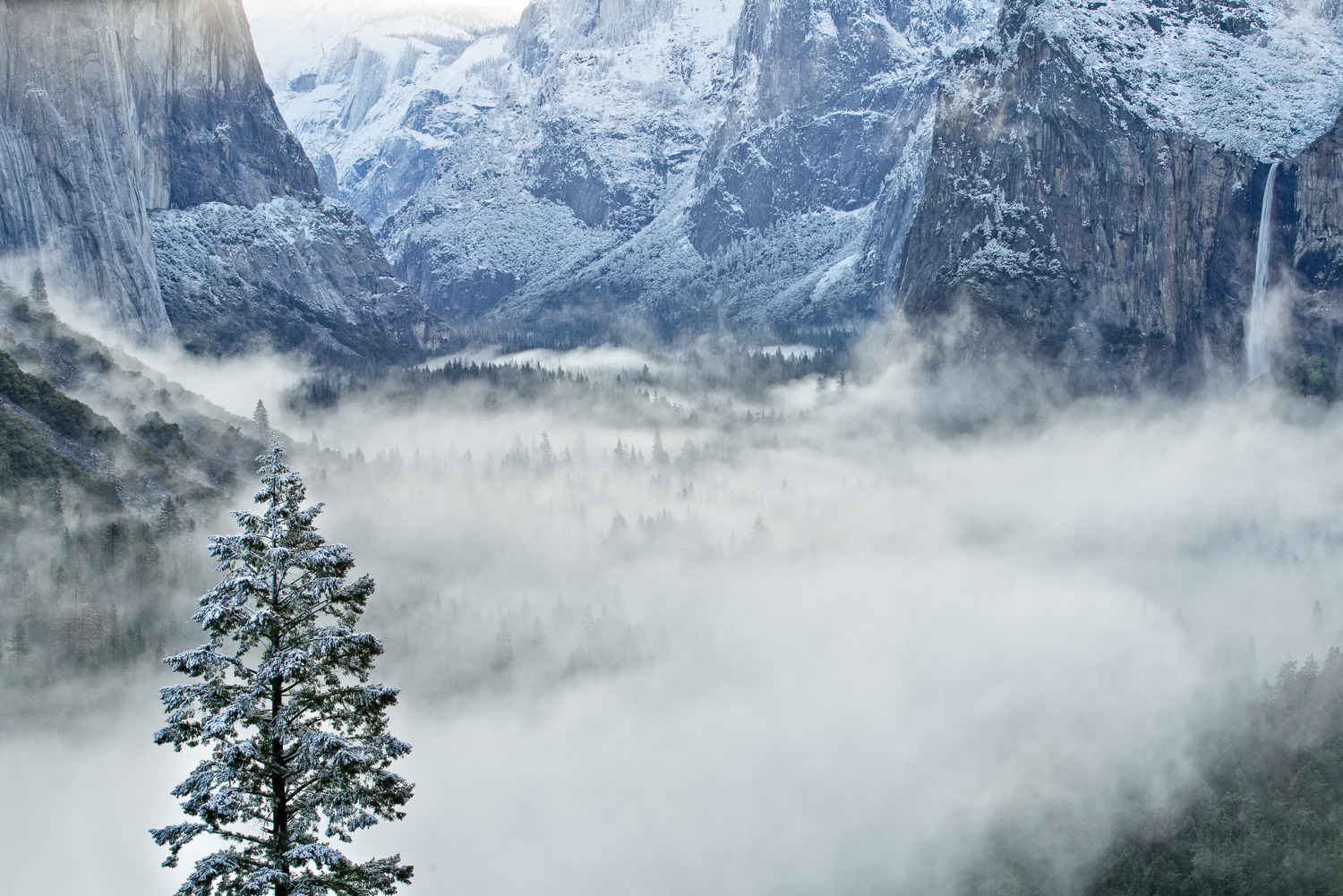 A layer of fog fills Yosemite Valley after a recent snow storm