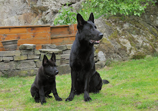 Photo: Ikita og tante Vilma (Ulvehiets Back in Black)