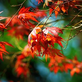 Orange on Green by Rhonda Kay - Nature Up Close Trees & Bushes