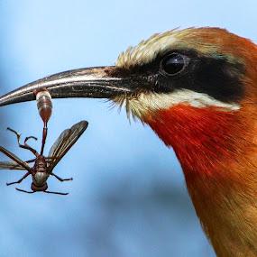 Stinger snack by JD Lotz - Animals Birds
