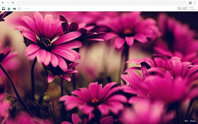 Pink Flower Wallpapers Hd Best New Tab