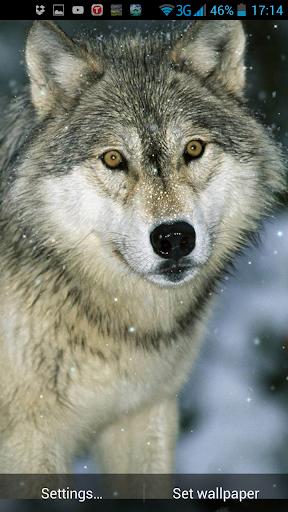 玩免費個人化APP|下載狼隊動態壁紙 app不用錢|硬是要APP