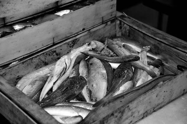 Il pescato del giorno di Silvia Ortona
