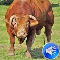 Bull Sounds Ringtones icon