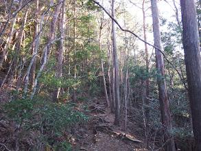 左に植林帯